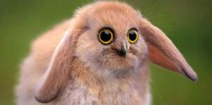 A fictional new species of Rabbit owl