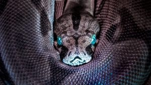 close up of snakes face