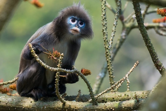 Scientists discover a new monkey