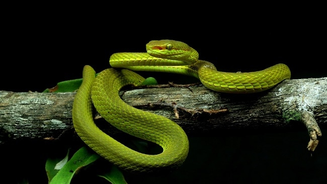 scientists discover a new species of snake